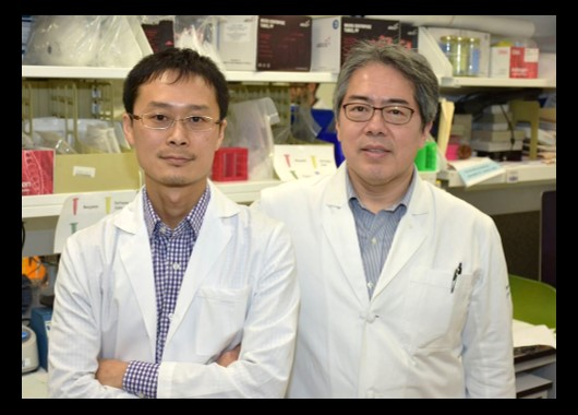 Drs. Tetsuro Kobayashi and Keisuke (Chris) Nagao, authors of the study.