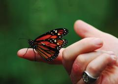 Butterfly sitting on a hand of a person with psoriasis patches appear on the fingers.